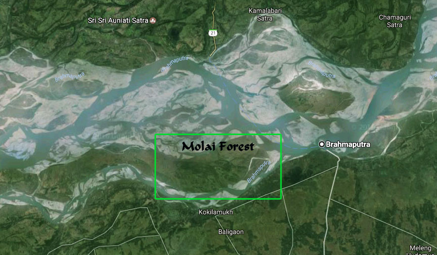 location of molai forest in Assam